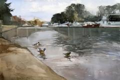 Ducks at Richmond