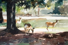 Deers at Dunham Massey