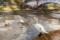 Swans at Pooley Bridge, Lake District