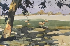 Sheep in Dappled Shadow